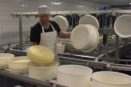 Terschellinger cheese